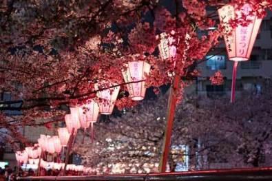 Japan-Food-Tours-Cherry-Blossom-Tour-2-1