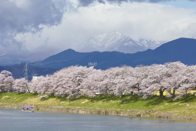 The Best Time to See Cherry Blossoms in Japan: Cherry Blossom Forecast 2020