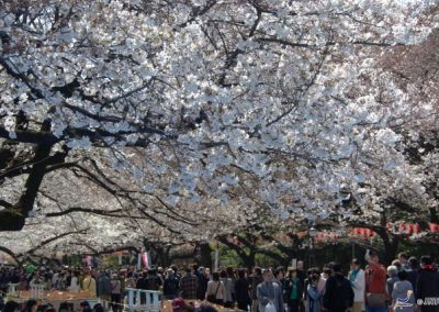 Luxury Japan Travel - Luxury Japan Tours (100) (Small)