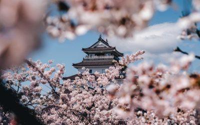 Top 5 Cherry Blossom Experiences in Kansai (Kyoto, Osaka, Kobe, Himeji)