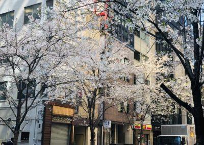 Luxury Japan Travel - Luxury Japan Tours (8) (Small)